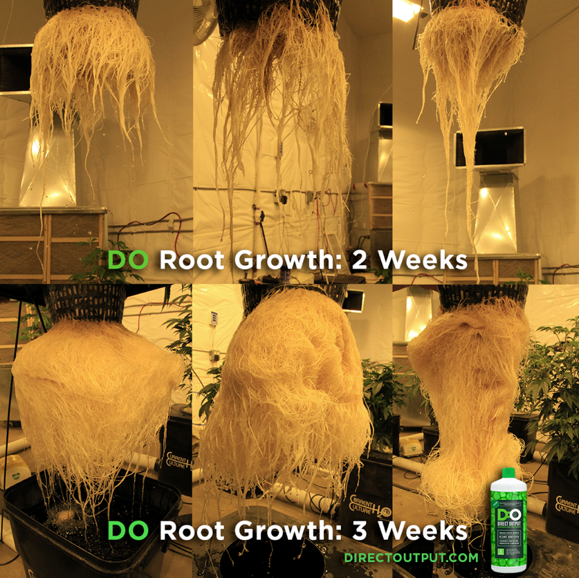 rootgrowth-do-dissolved-oxygen.png