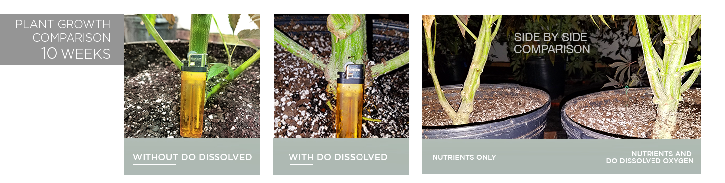 bud-growth-dissolved-oxygen-2-results-directoutput.png