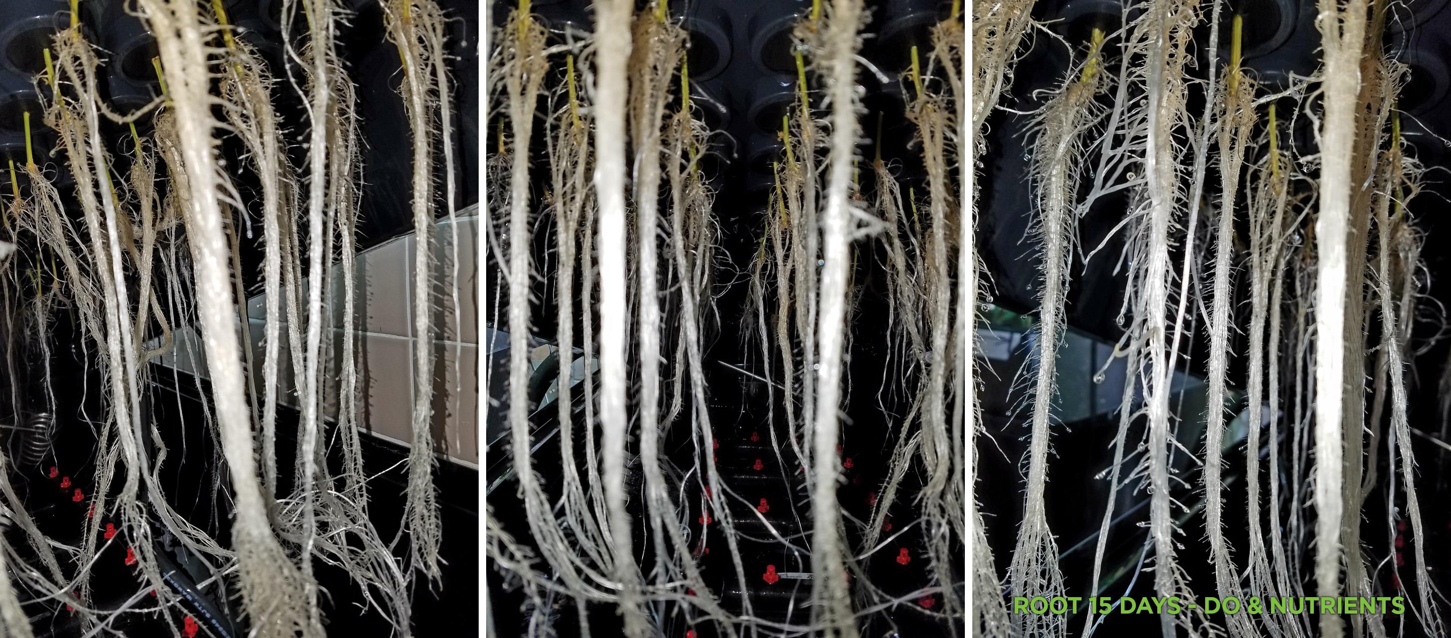 rootdevelopment-day15.jpg